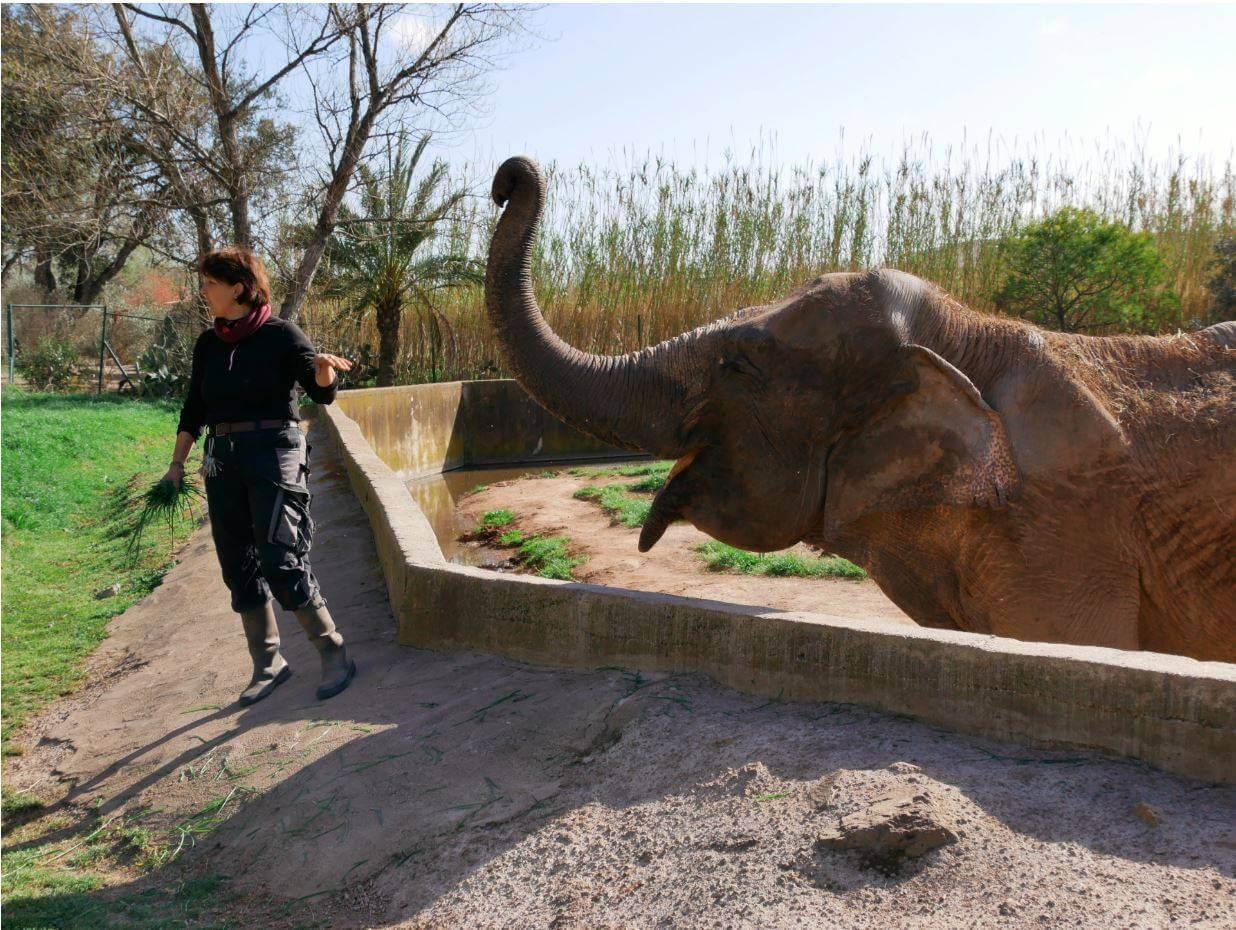 Photo de l' élèphant Gina , le doyenne du zoo de fréjus avec son soigneur
